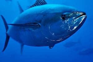 ocean animals, animals, sea animal