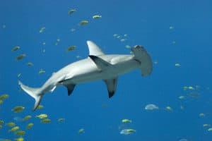 ocean animals. animals, sea animals