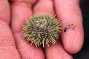 Sea animals, marine life, sea ecosystems