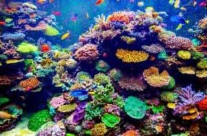 ocean ecosystem - coral reefs