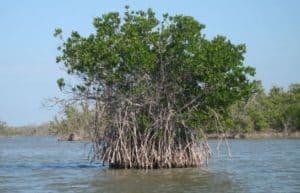ocean ecosystem - mangrove forest