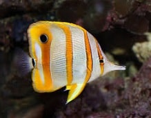 20 types of small ocean fish characteristics for Types of small fish