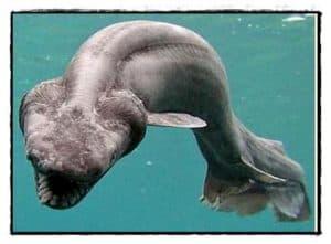 ocean animals. sea animals. animals
