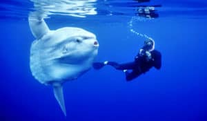 animals, ocean animals, sea animals