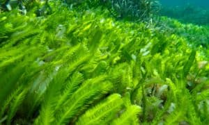 ocean plants, plants