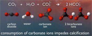 ocean acid, ocean environment