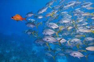 natural resources, ocean resources