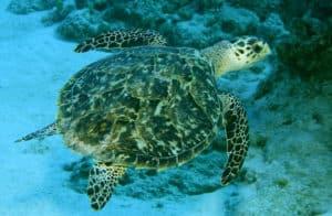 animals, sea animals, turtles, marine life, fauna