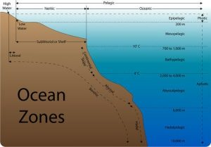 types of zones in ocean