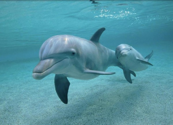 15 Helpful Ways To Save the Dolphins