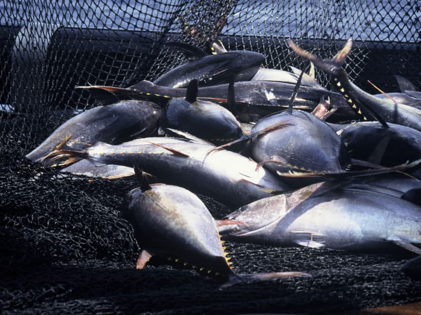 Overfishing in the Ocean – Causes – Efforts