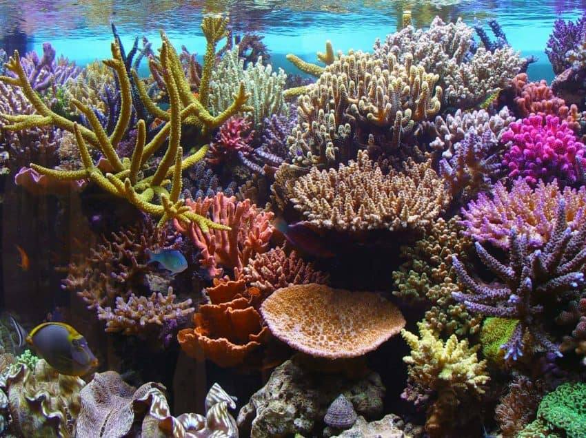 15 Causes of Coral Reef Destruction – Effects