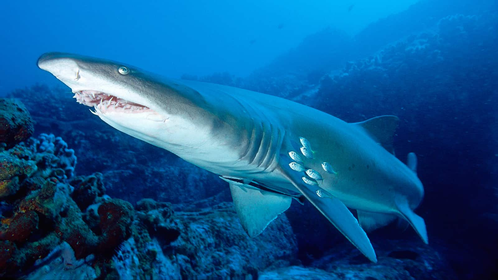 Animals in The Coral Reef - DeepOceanFacts.com  Animals in The ...