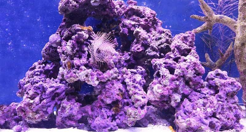 17 Plants in The Coral Reef – Characteristics