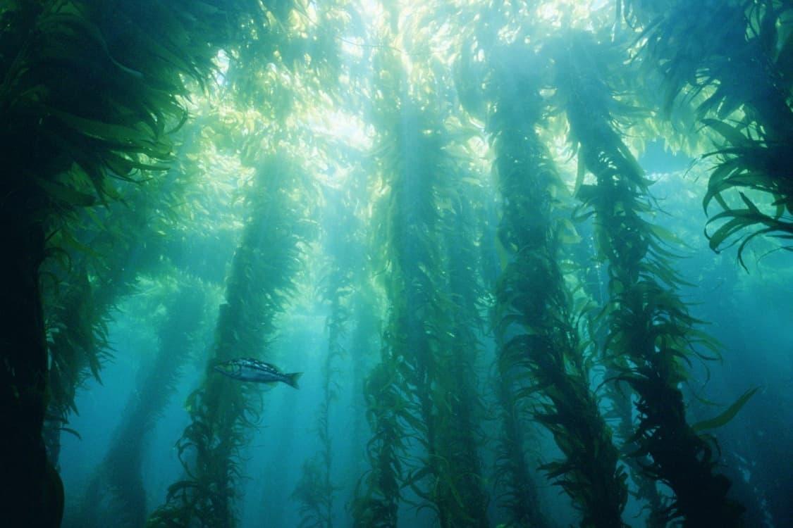 17 Plants In The Pacific Ocean List Deepoceanfacts Com