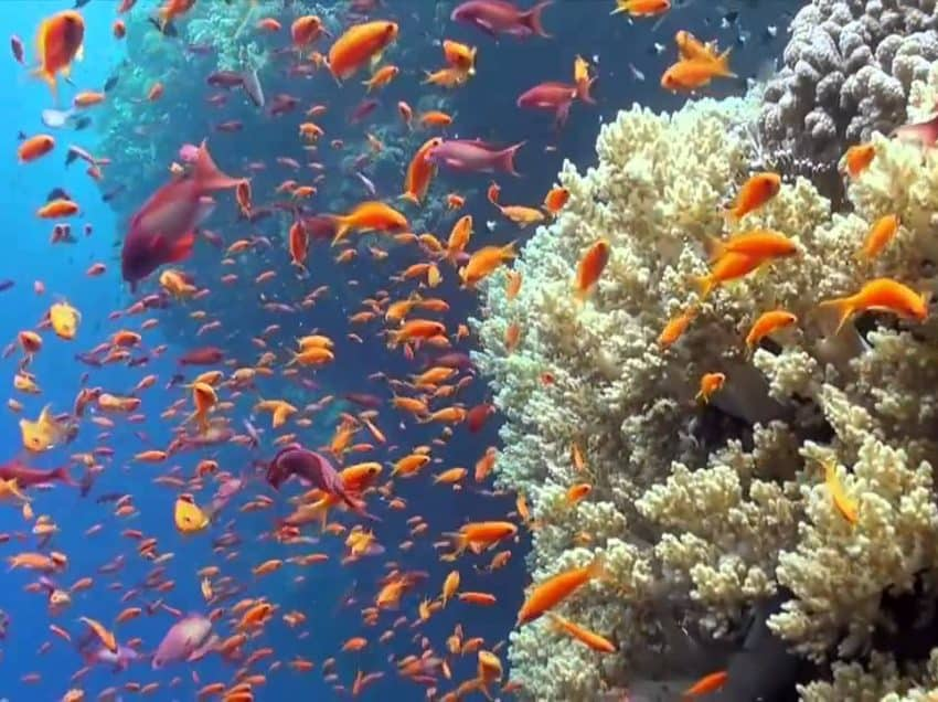13 Threats to the Great Barrier Reef – Effects