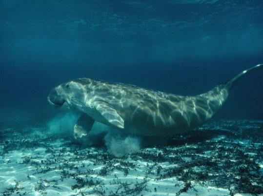 15 Threat to Ocean Organisms