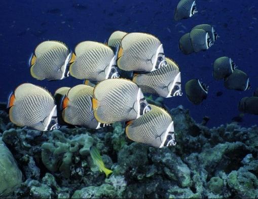 20 Types of Small Ocean Fish – Characteristics