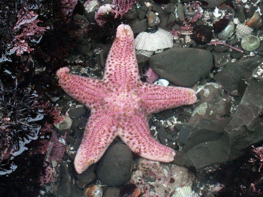 20 Facts about Starfish – Characteristics