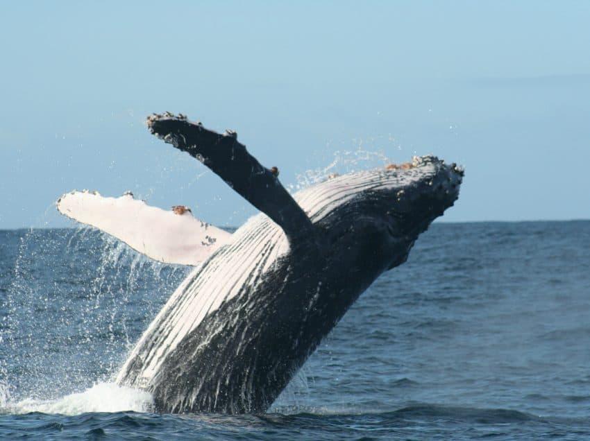 17 Endangered Species in The Ocean Biome