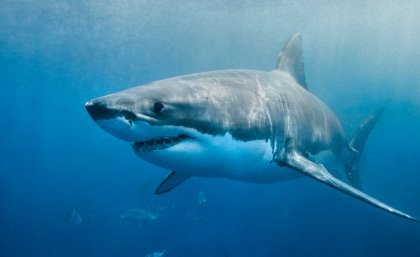 15 Importance of Sharks in The Marine Ecosystem