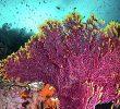15 Types of Ocean Vegetation – Characteristics