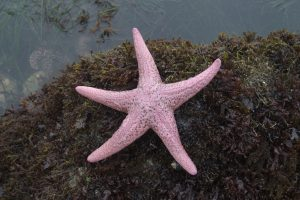 17 Types of Starfish in the Great Barrier Reef