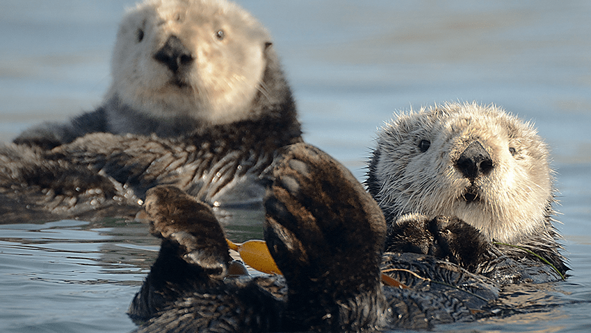 20 Threats to Sea Otter – Solutions
