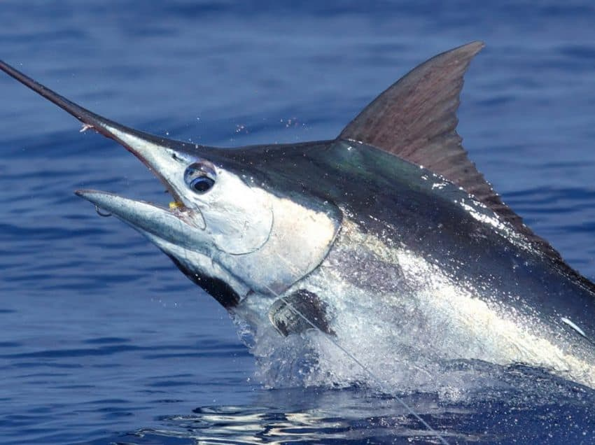 15 Types of Ocean Predators