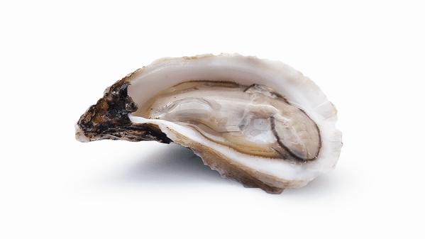 15 Types of Ocean Mollusks