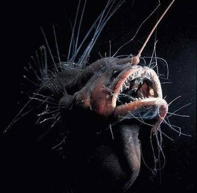 17 Characteristics of Deep Ocean Animals