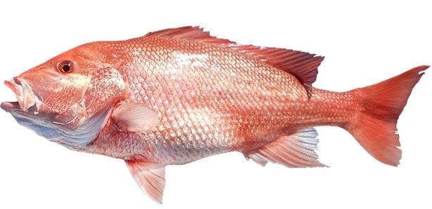 17 Types of Ocean Fish to Eat