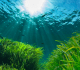 The Amazing Uses Of Sea Plants For Medicines You Should Protect