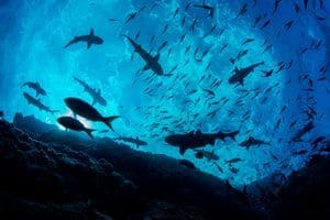 17 Tips for Ocean Conservation