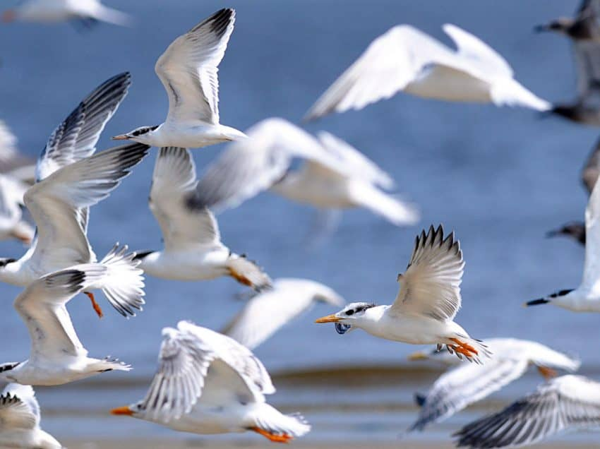 13 Function Of Seabirds You Must Protect