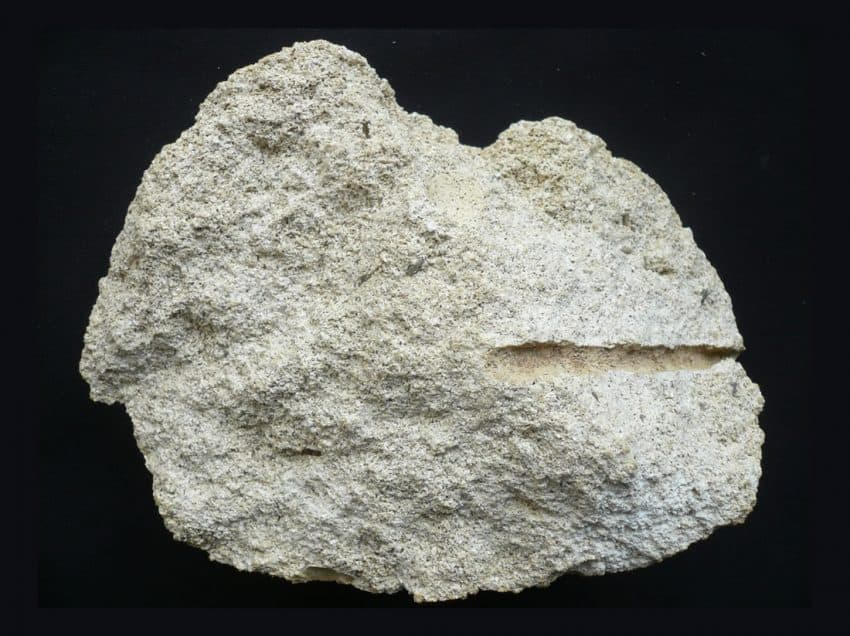 Marine Sediment Rocks: Definition, Types, and Examples