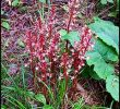 20 Benefits of Coral Root for Health