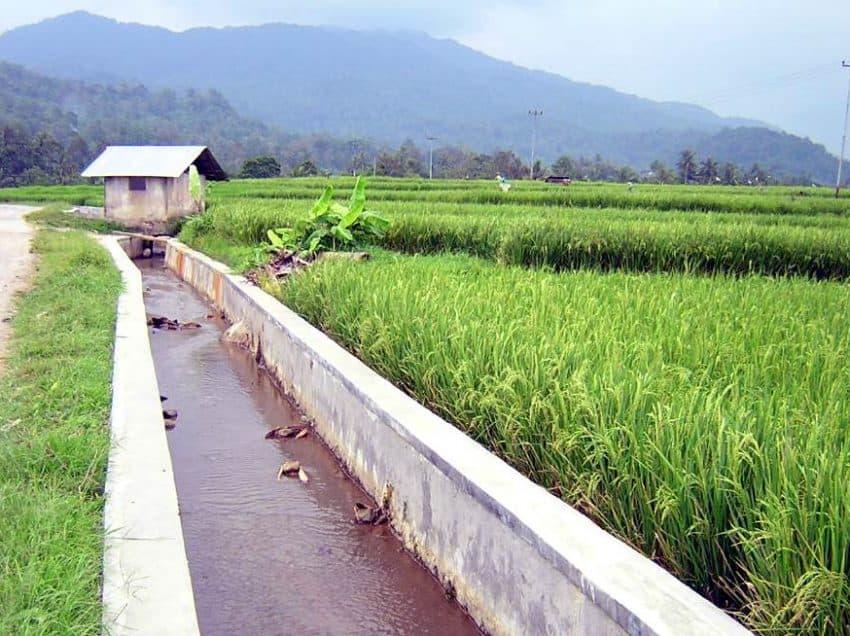 13 Effects of Ocean Water as An Irrigation Supplement