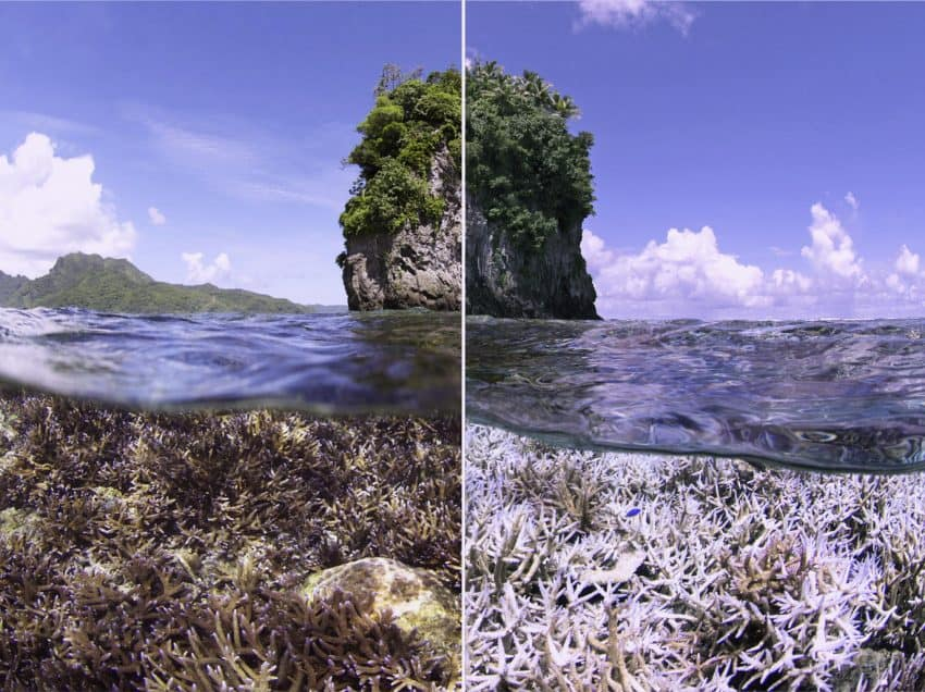 13 Effects of Rising Sea Levels on The Great Barrier Reef