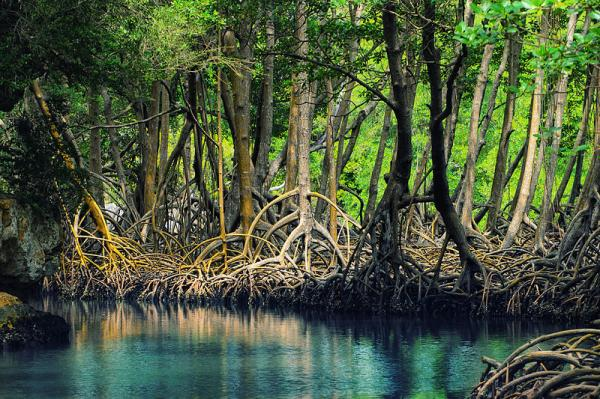 4 Types of Mangrove Forest in the World