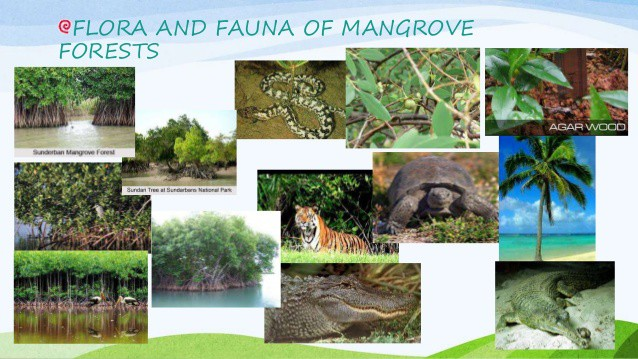14 Flora and Fauna That Are Found in Mangrove Forest