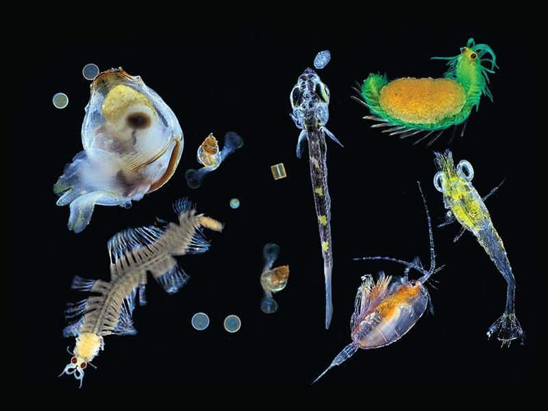 Marine Biota Along With the Definition, Benefits and Images