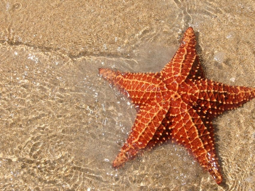Star Sea 5 Stages of Life Cycle in Brief