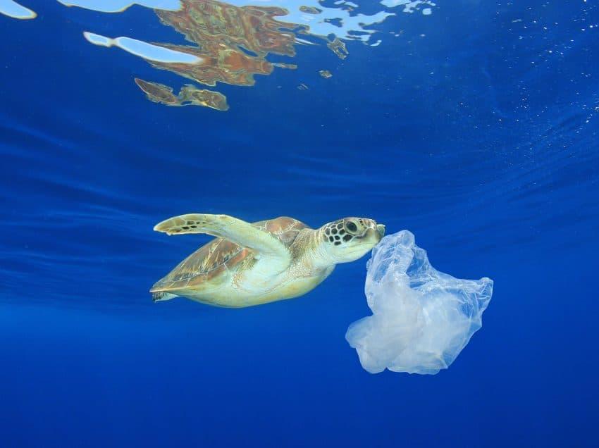 12 Effects of Plastic on Sea Turtles