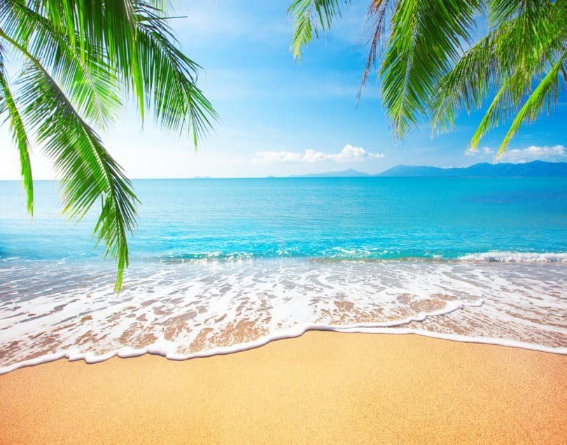Characteristics of the Beach According to Experts
