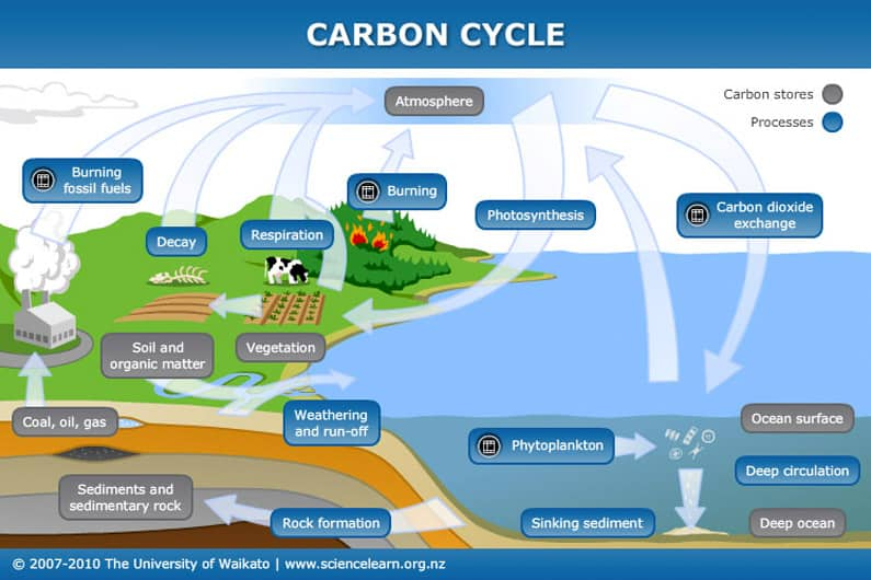 Marine Functions in the Global Carbon Cycle